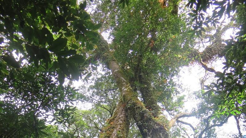 Doi Inthanon Kiw Mae Pan trees