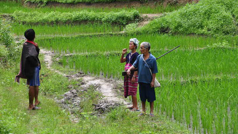 Karen couple in the ricefields
