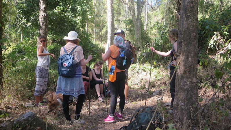 Trekkers in the forest
