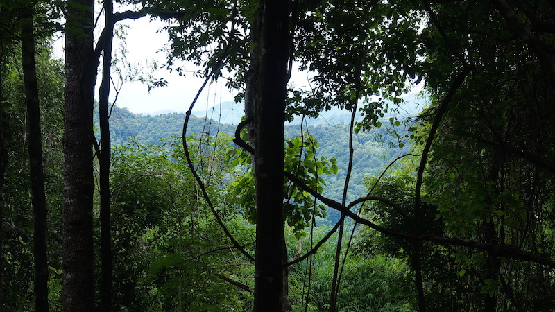 Mae Kampong forest view