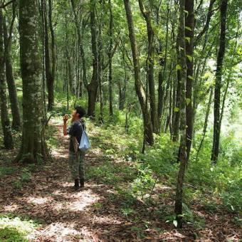 Trekking at Mae Kampong