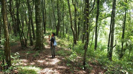 Guide in the forest during Trekking at Mae Kampong