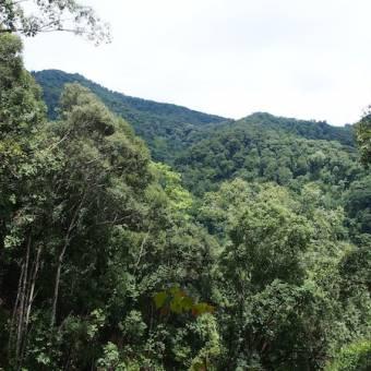 Mae Kampong view