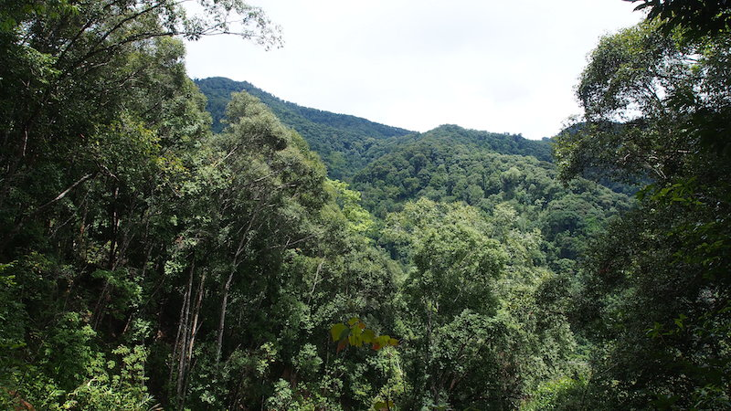 Mae Kampong view of the lush forest