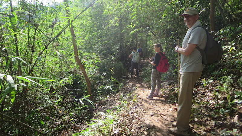 guests trekking in the jungle