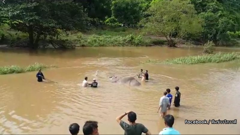 Elephant rescue necessary to lift elephant out of the river