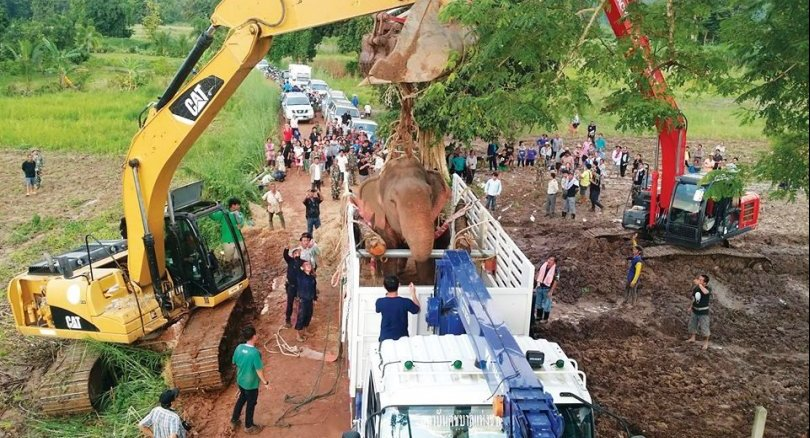 Elephant rescue Lifting injured elephant into a truck for transfer to the Thai Elephant Conservation Center