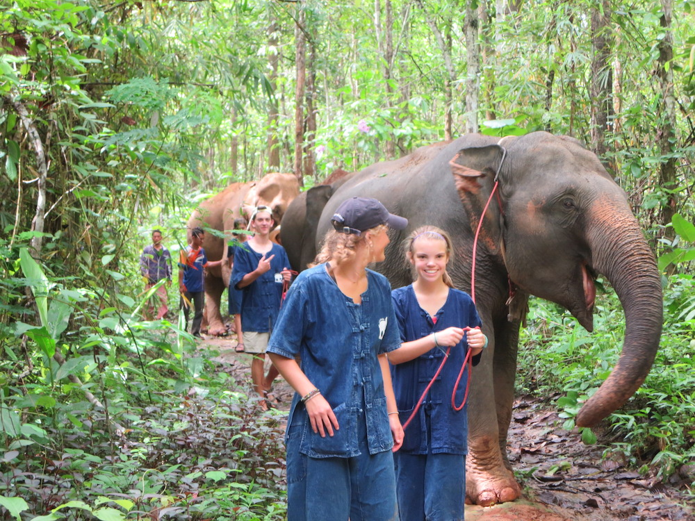 Guests leading elephants Karen Culture and Elephant Experience