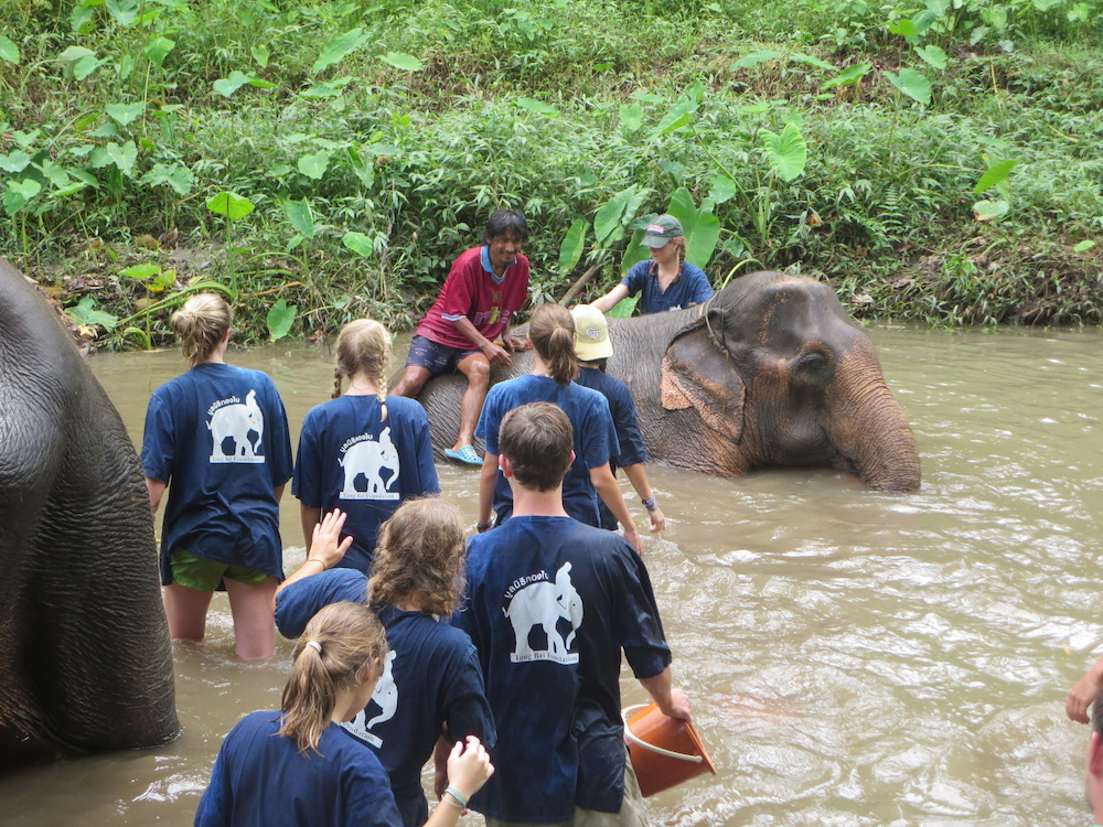 Guests bathing elephants Karen Culture and Elephant Experience