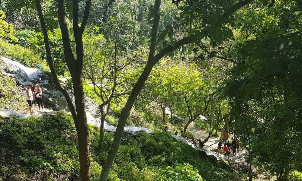 Buatong Waterfall forest