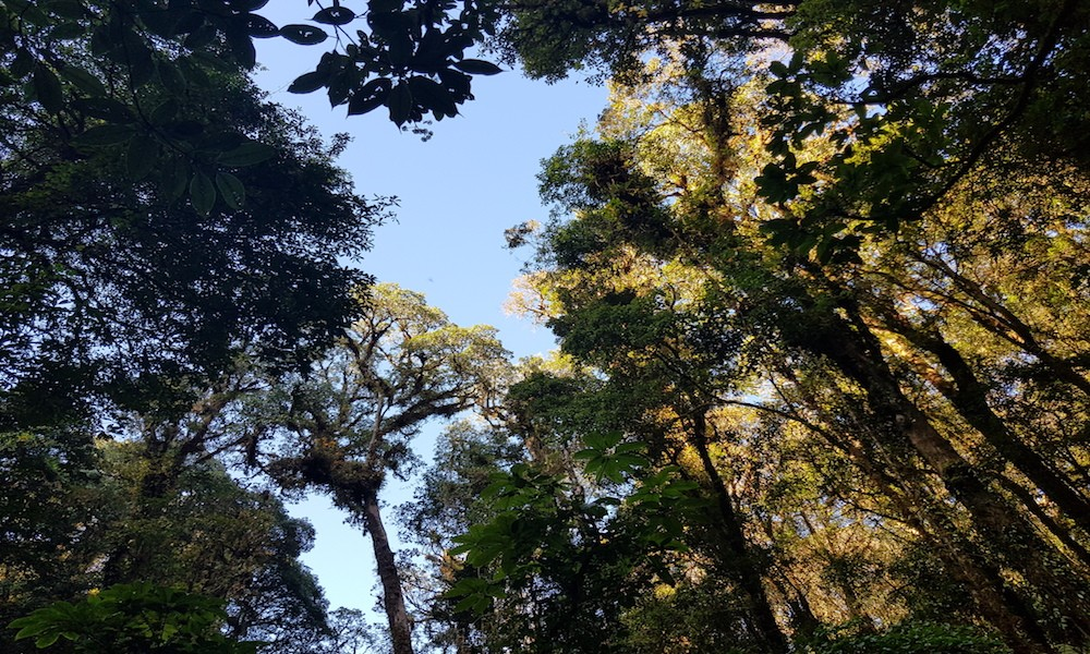 Tree tops at Doi Inthanon National Park