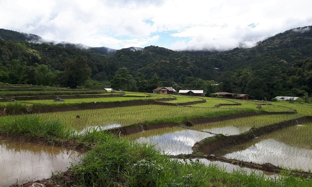 View of Ricefields Doi Inthanon