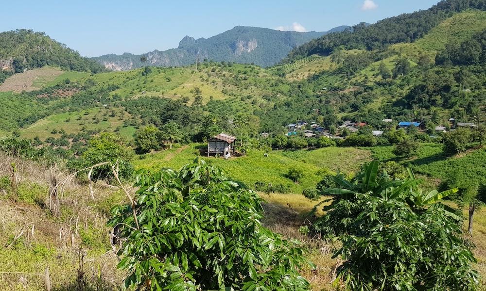 scenery at Chiang Dao