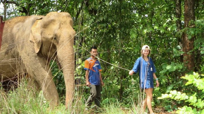 Guest and Mahout Karen Culture and Elephant Experience