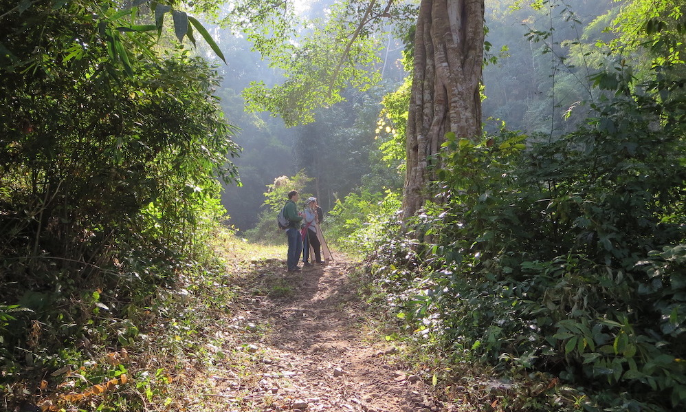 Chiang Dao Forest Trail trekking