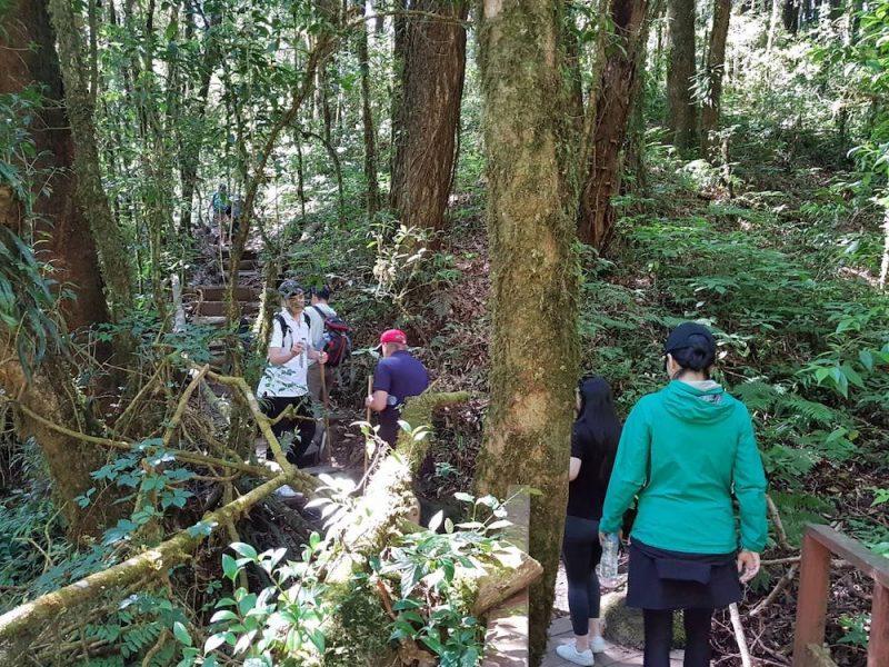 Guests on Kew Mae Pan Trail trekking Doi Inthanon