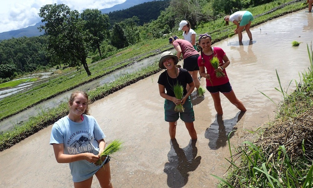 Students planting rice