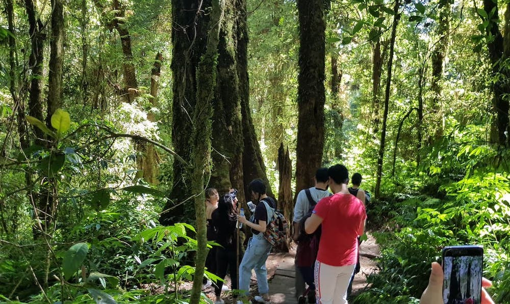 Tourists trekking on Kew Mae Pan Trail Doi Inthanon