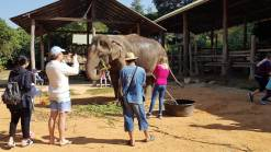 Cleaning an elephant at Elephant Care Center