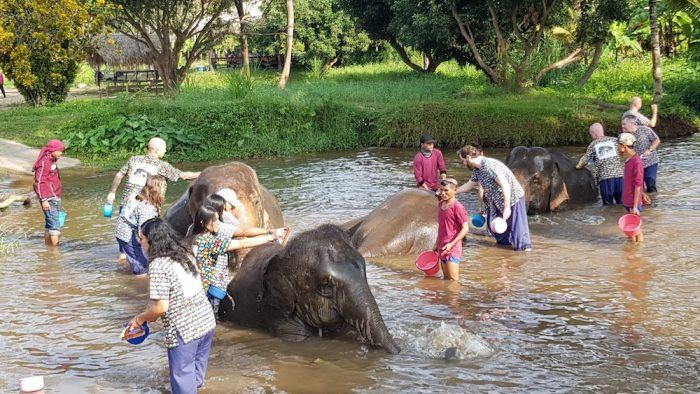 bathing elephants at Kantha Elephant Camp Sticky Waterfalls Adventure