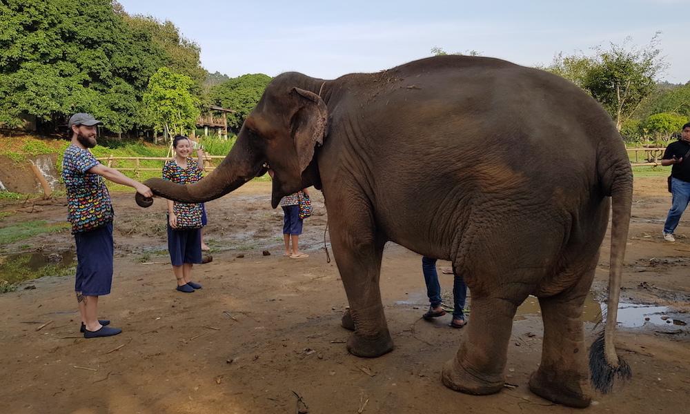 elephants handshake at Kantha Elephant Camp Elephant Care and Tribal Life of the Mae Sa Valley