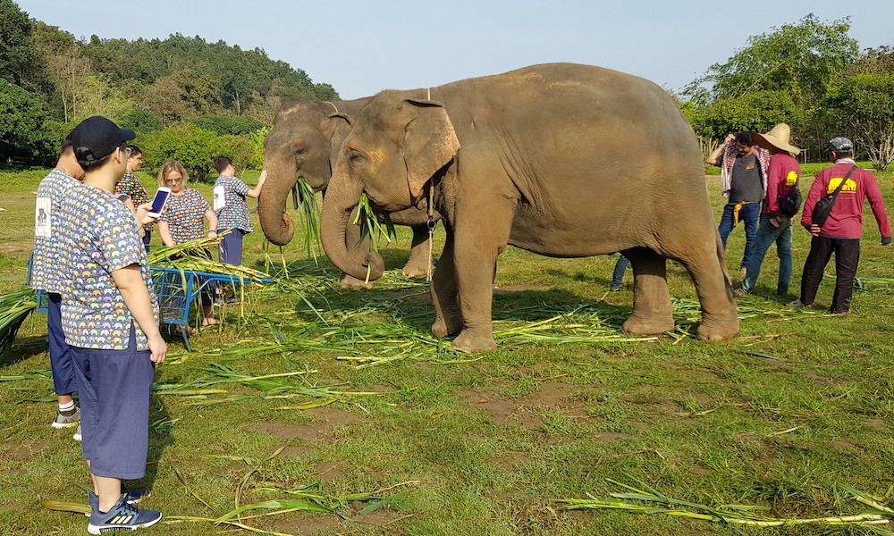 feeding two elephants at Kantha Elephant Camp Elephant Adventure