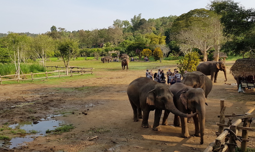 Overview of Kantha Elephant Camp