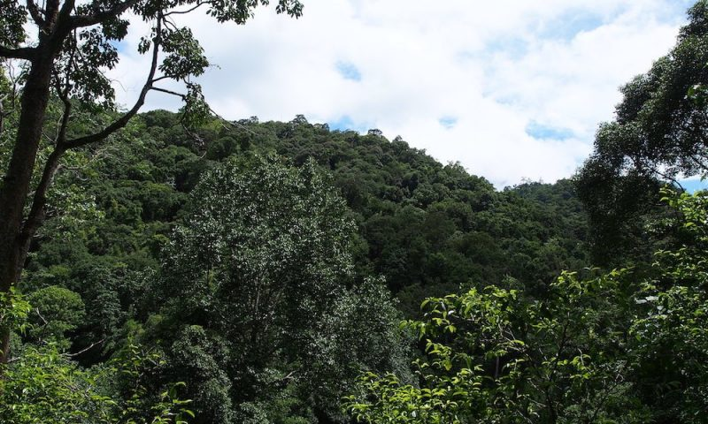 Chaeson Forest View