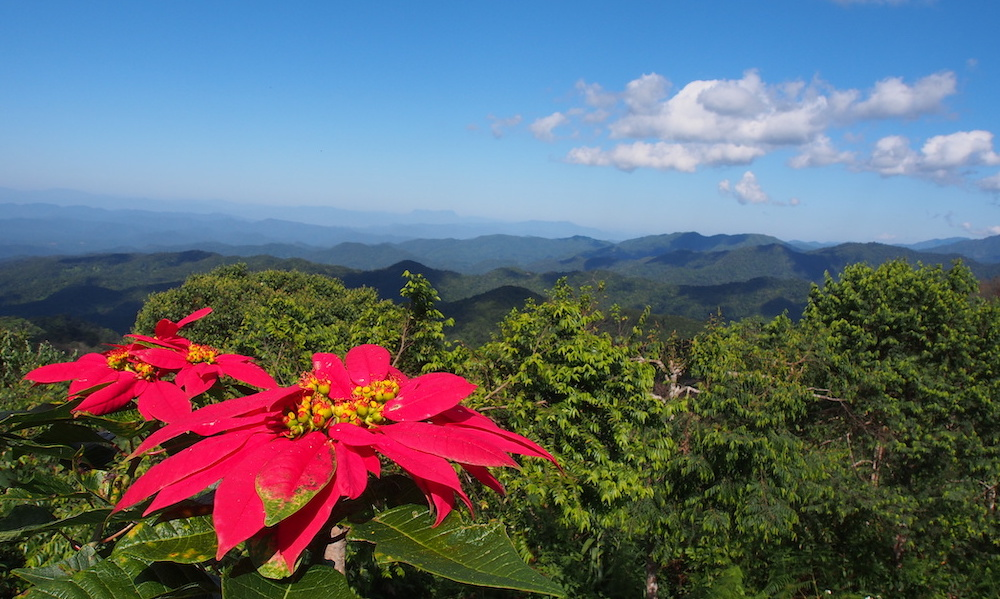 Red flower and view from Doi Mon Lan