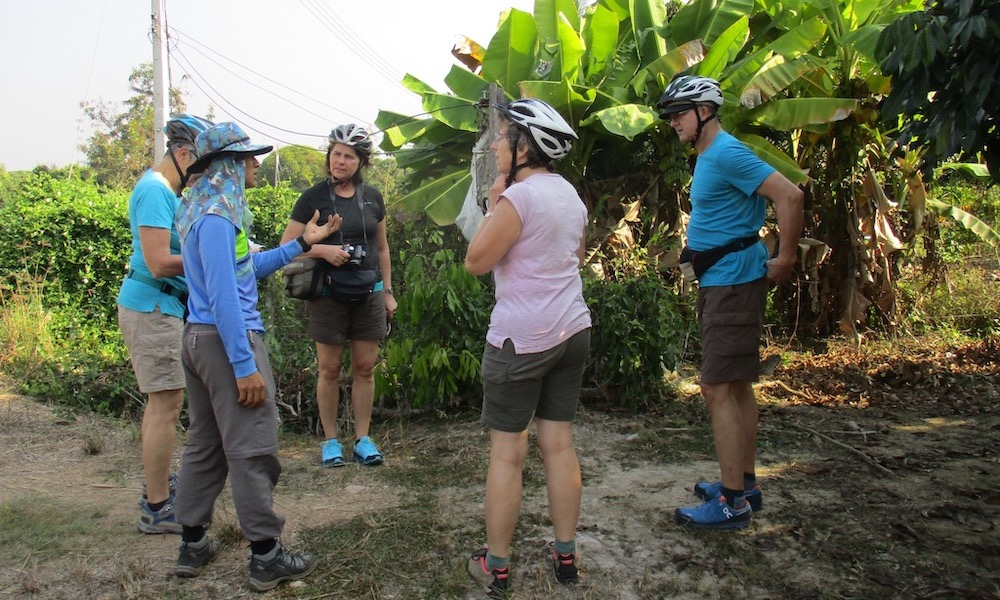 Guide and guests cycling San Patong