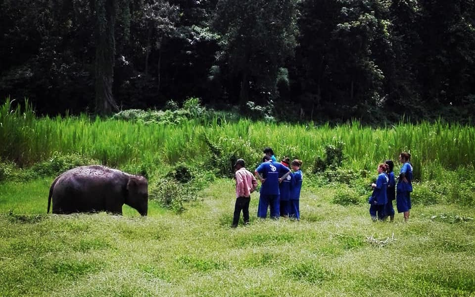 Guests Observing one elephant at Elephant Paradise