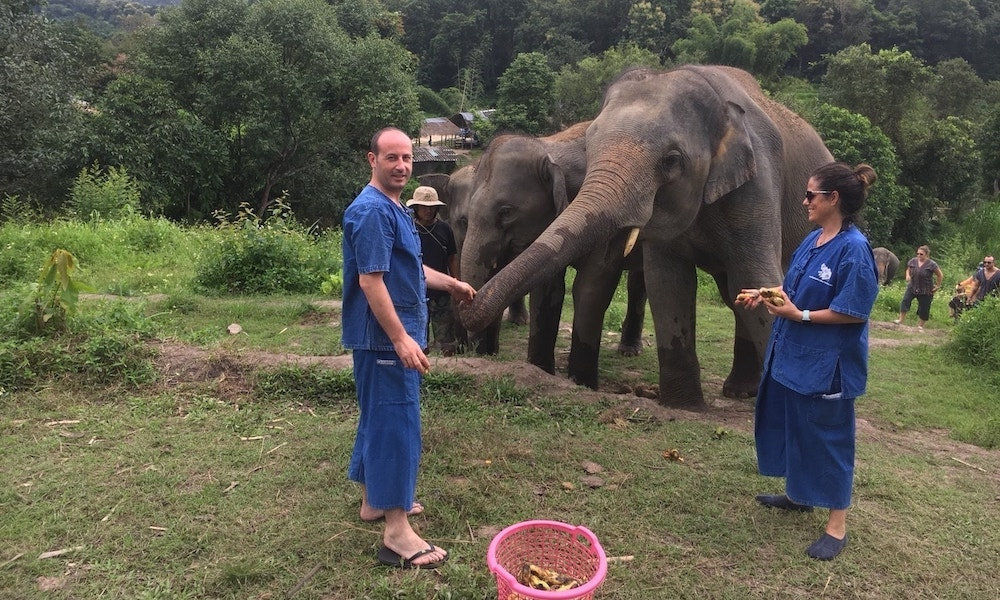 Two guests feeding elephants