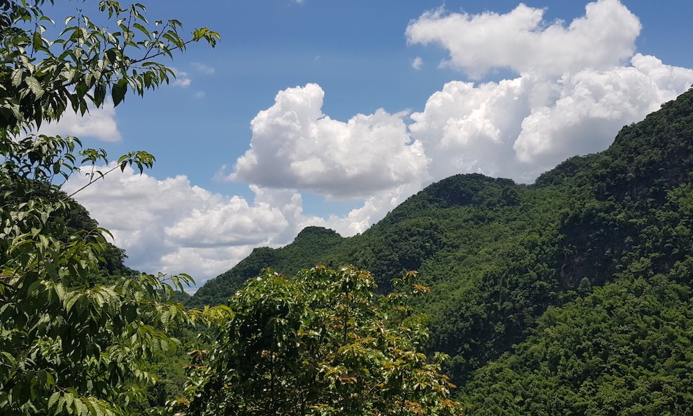Doi Angkhang forests with green leaves