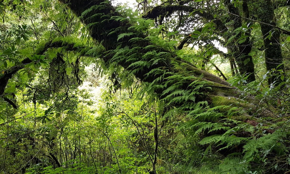 tree with Ferns and mosses