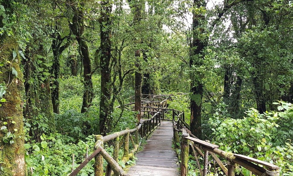 Walkway in the forest Doi Inthanon