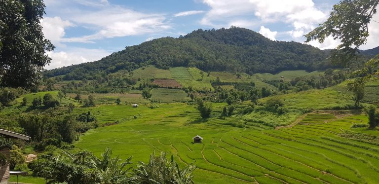 Rice terraces and forests
