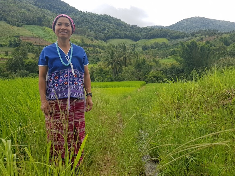 Woman in traditional dress in ricefield