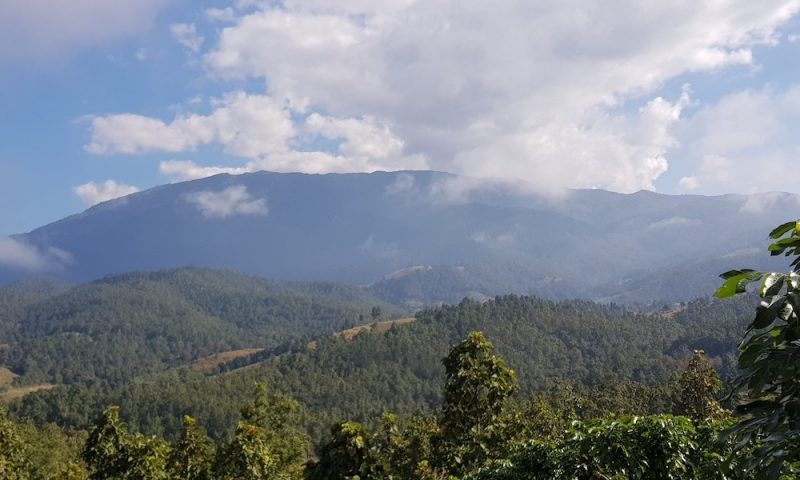Forests and mountains