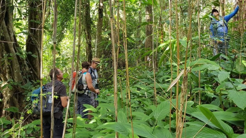 Guide with tourists in the forest Chiang Mai Jungle Trekking Huai Nam Dang