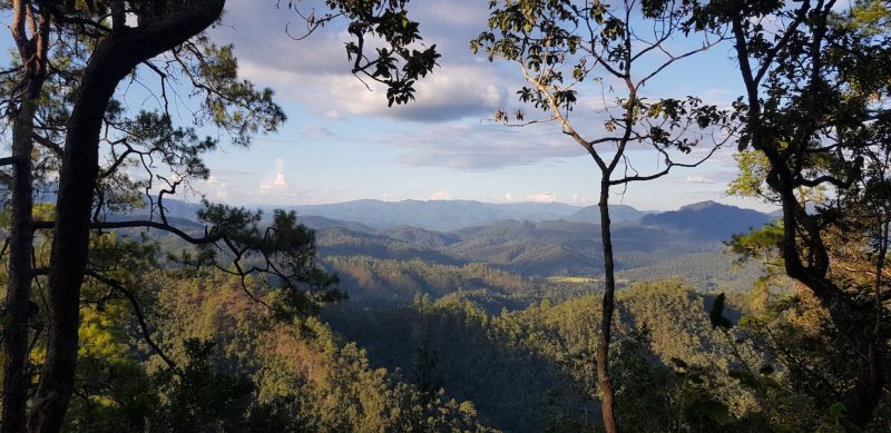 Trees with a view of mountains and forests North Thailand flora Huai Nam Dang
