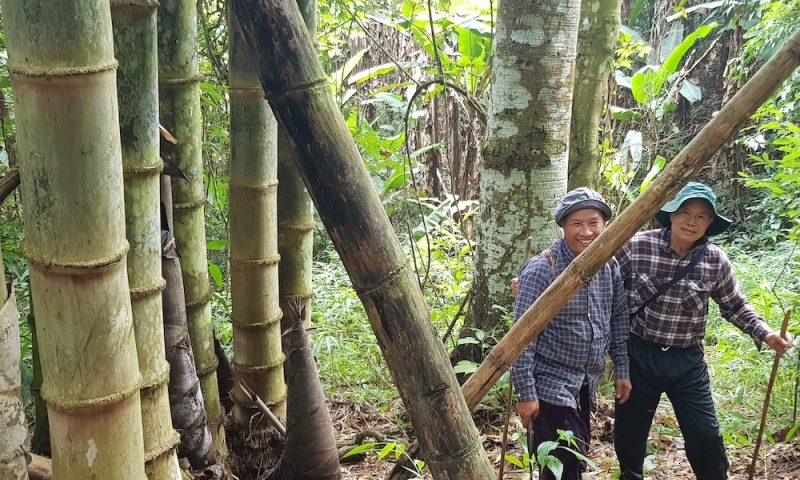 Two men next to very big bamboo