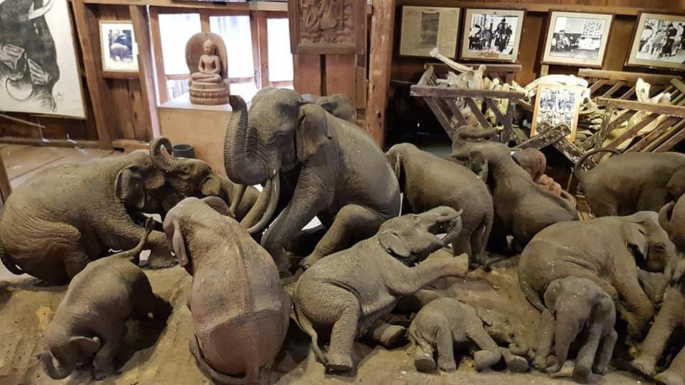 Wooden elephants in museum