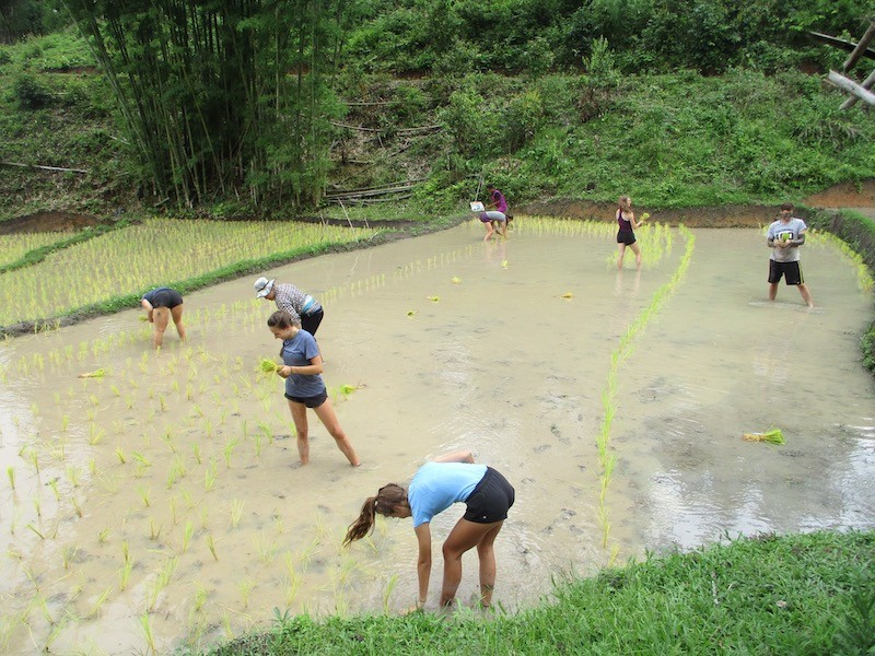 Young people standing in a wet rice field