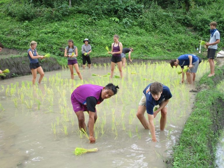 Young people standing in a rice field university tours