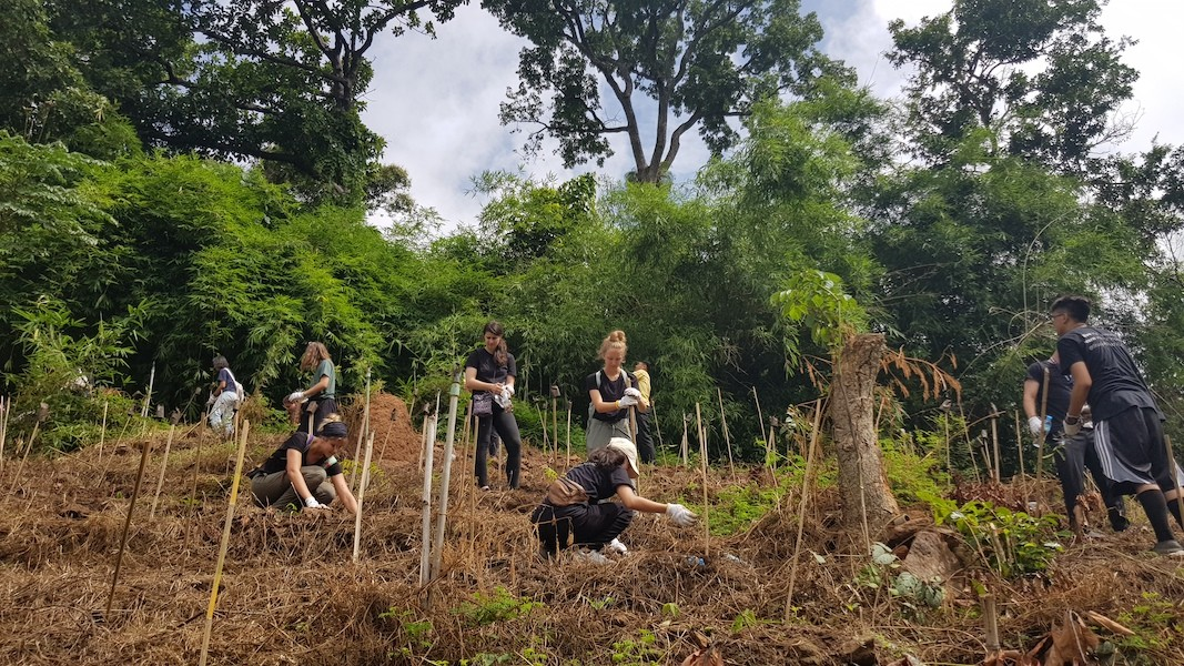 Group of young people working on the land