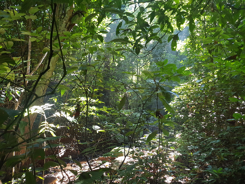 Trail in a tropical forest Chiang Mai Jungle Trekking