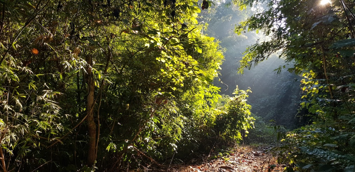 Morning sunlight in forest