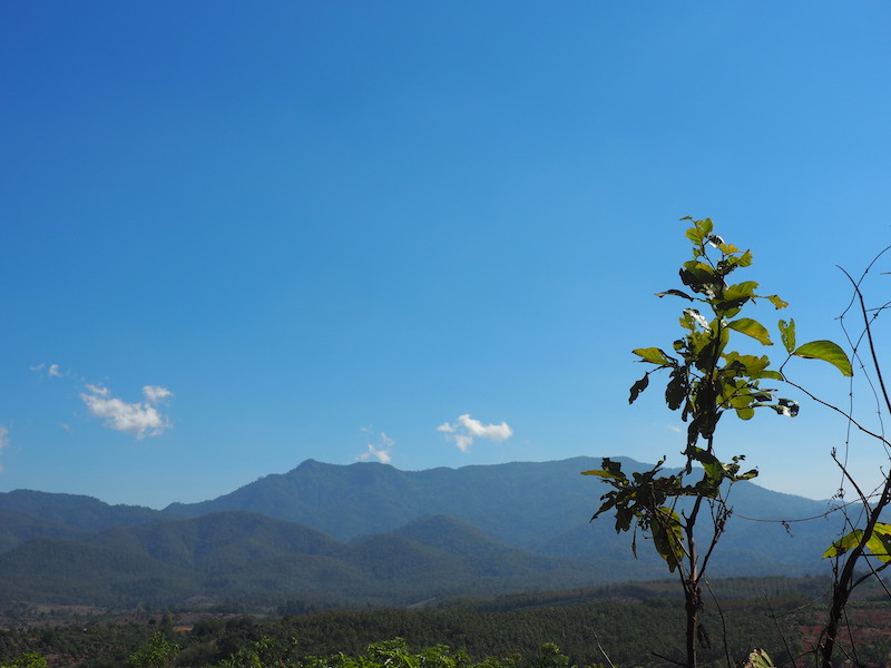 Plant with mountainview and blue sky Tree planting chiang mai trekking areas