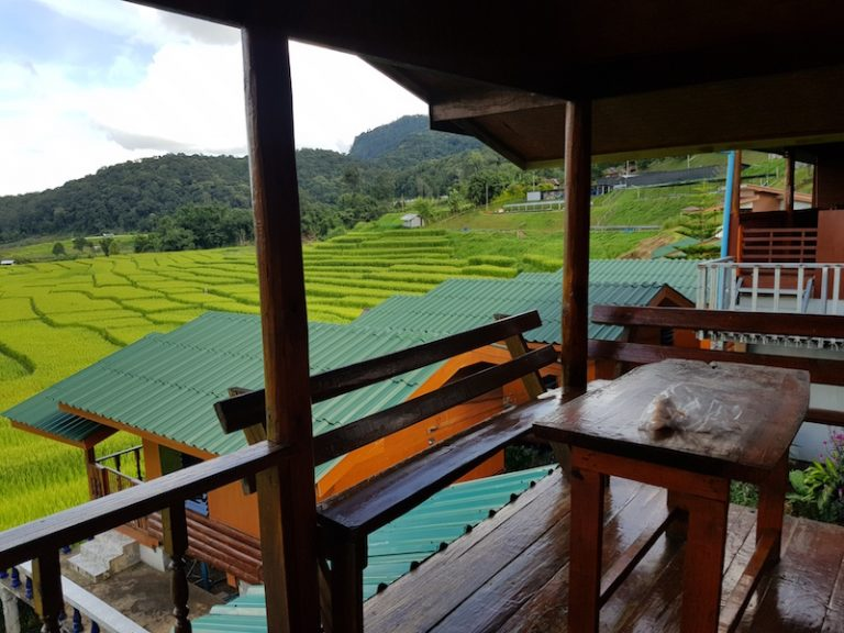 View over rice fields