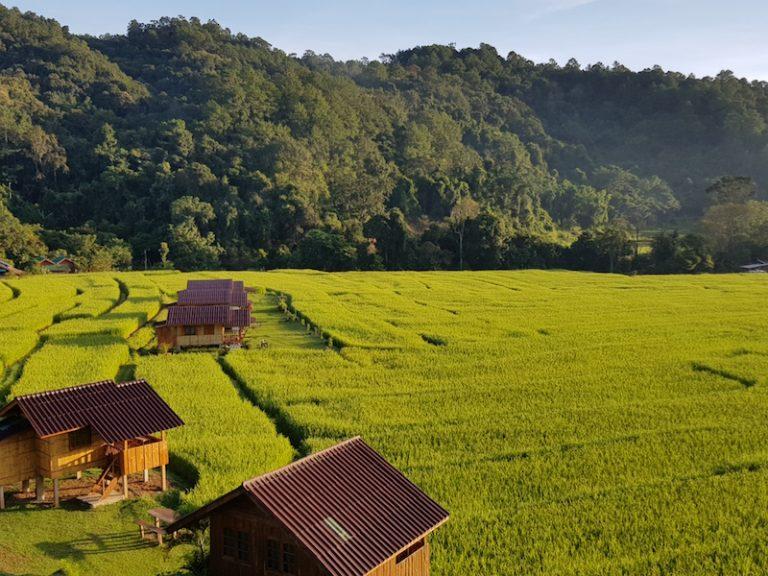 Houses in rice paddies Pha Dok Siew Trail